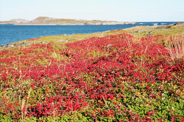 Растительный мир Швеции