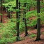 Лесное хозяйство и лесоперерабатывающая промышленность Швеции