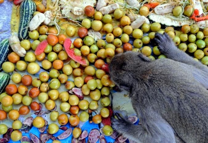 Обезьяна есть фрукты со стола
